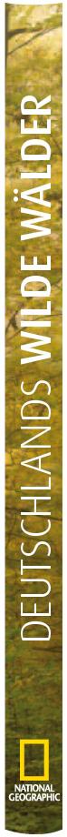 Erdgeschoss Grafik | Esther Gonstalla | Buchgestaltung | Deutschlands Wilde Wälder